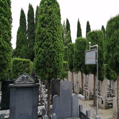乐乡公墓传统墓
